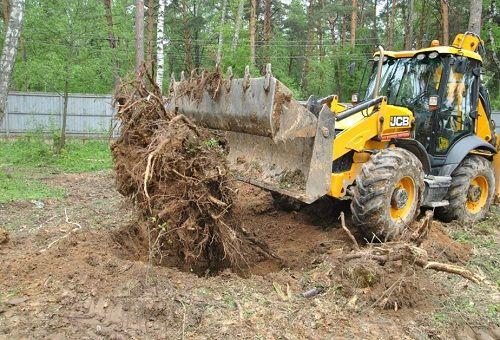 Вырубка ненужных деревьев
