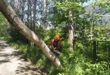 Сруб дерева