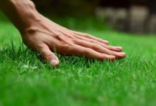 Рука на гозонной траве