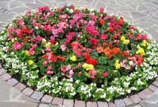 клумбы с цветвми