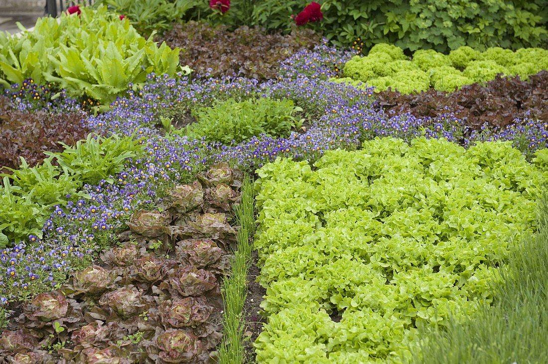 Что такое декоративный огород
