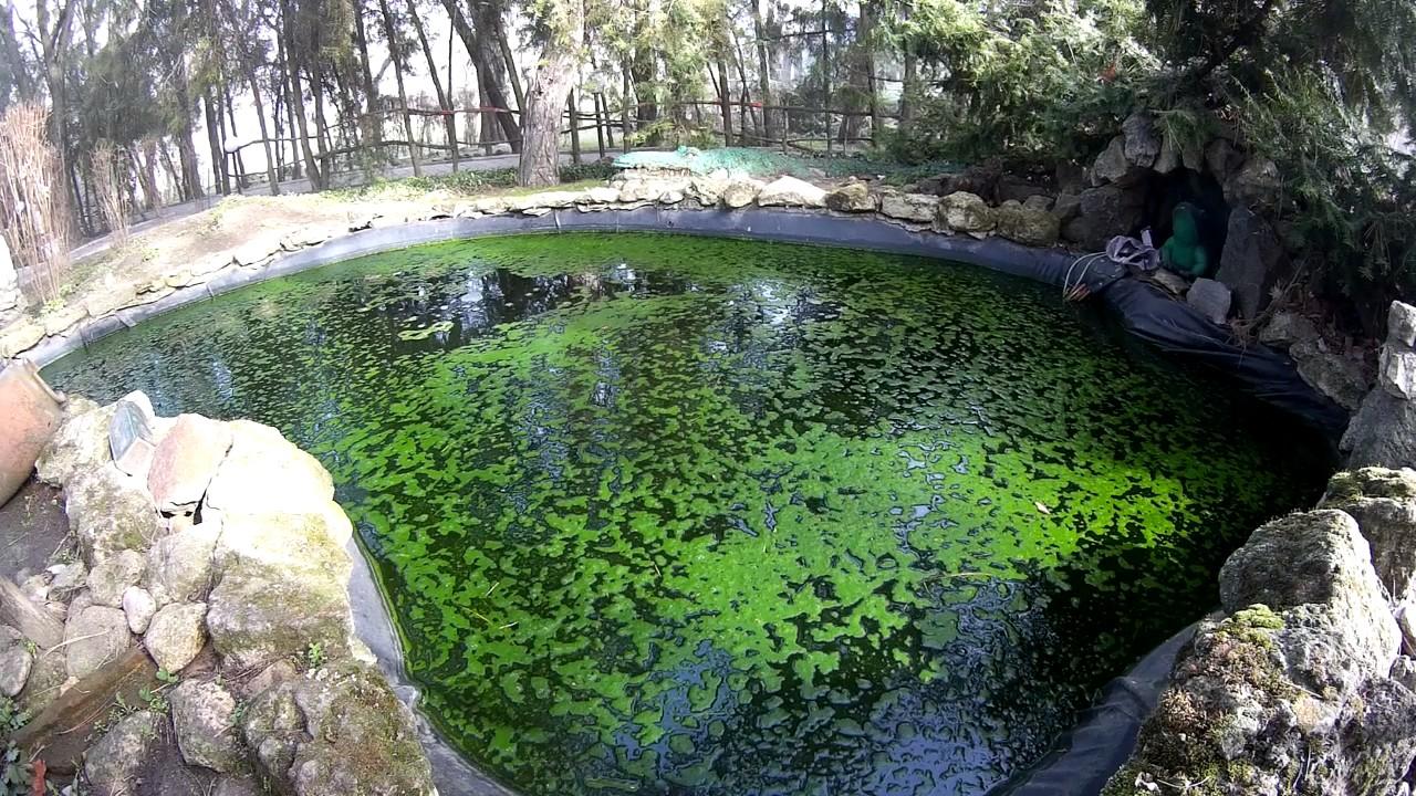 Загрязнился пруд